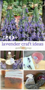 When Is Lavender In Season In Michigan by Harvesting English Lavender U0026 How To Use It Garden Therapy