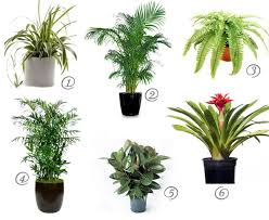 extremely house plants toxic to cats 10 household that are