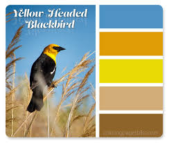 Color Palette Yellow by Nature Inspired Color Palettes
