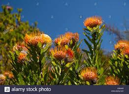 Kirstenbosch National Botanical Gardens by South Africa Cape Town Kirstenbosch National Botanical Garden