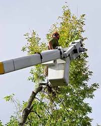tree service experts serving cleveland ohio express tree service