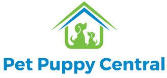 affenpinscher dogs for sale affenpinscher puppies affenpinscher dogs petpuppycentral breed