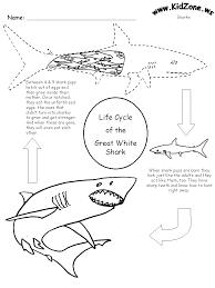 shark activity sheet lifecycle of a shark