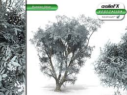 asilefx single solidgrowth plants russian olive asilefx