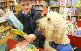 How Does A Guide Dog Help A Blind Person Animal Magic How A Dog Has Transformed The Life Of A Quiet Boy
