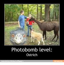 Ostrich Meme - photobomb level ostrich handcrafted by pon3box for ifunny