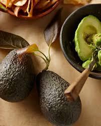 best 25 avocado tree for sale ideas on fast growing