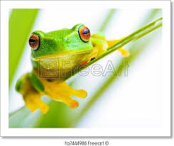 free print of small green tree frog holding on the palm tree