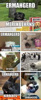 Ermahgerd Animal Memes - animal memes ermahgerd erll the ernuhmurls i can has