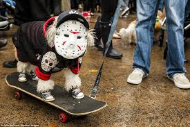 Skateboard Halloween Costumes Dogs York Dressed U0027s 26th