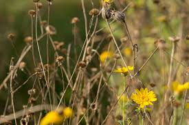 wild flowers in wild meadows how to care for your site after flowering grow wild