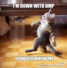 Cute Cat Meme Generator - cat meme generator the best cat 2017