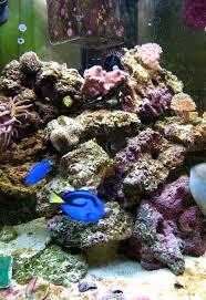 Marine Aquascaping Techniques Marine Aquarium Wikipedia
