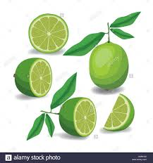 lime silhouette whole stock vector images alamy