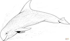 dolphin 18 coloring page free printable coloring pages