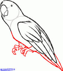 simple parrot drawing drawing art gallery