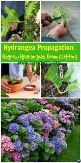 25 best hydrangea colors ideas on pinterest hydrangea flowers