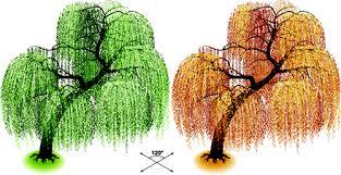 creative isometric trees design vector 06 vector plant free