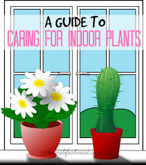 how to care for low light house plants home life abroad