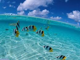 clearest waters in the world sea lync