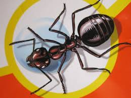 How To Kill Ants In The Kitchen by When Ants Attack How To Get Rid Of The Summer U0027s Most Annoying