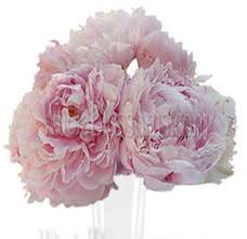 bulk peonies buy bulk peony wedding flowers on wholesale pricing