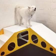 american eskimo dog washington state district dogs 23 photos u0026 56 reviews dog walkers 3210