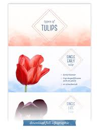 types of tulips a visual guide ftd com