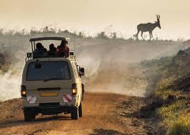 How to choose the best camera for safari buyers guide uganda365