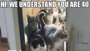 Cute Funny Cat Memes - funny ragdoll cat memes funny pics story