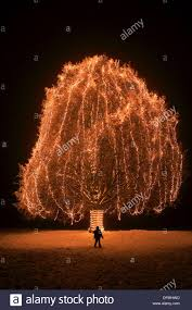 boy standing in front of big tree with lights at