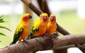 wallpaper of love birds love birds full full hd quality