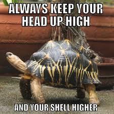 Tortoise Meme - always keep your head up high funny tortoise meme image