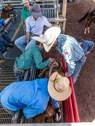 rodeo school in outback queensland trains next generation of
