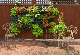 vertical wall garden archives shawna coronado