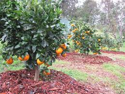 fruit delivered to your door fruit trees photos