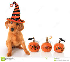 small halloween witch with no background halloween stock photos images u0026 pictures 224 694 images