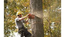 Three Brothers Landscaping by Three Brothers Tree Service Yellowbook