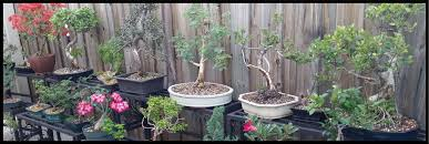 the secrets and symbolism of bonsai miami beach botanical gardens