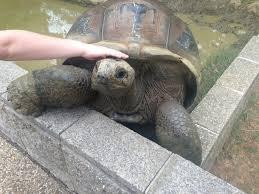 Tortoise Meme - i also saw the escaping tortoise meme guy