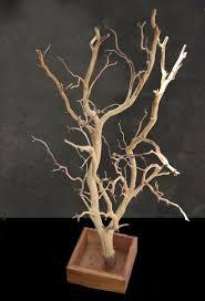 manzanita branches for sale 118 best manzanita branches images on flower