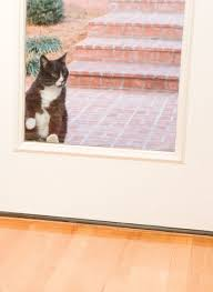 Interior Pet Door For Cats Dog Doors Petsafe Pet Doors For Dogs U0026 Cats