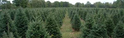 high ground tree farm llc