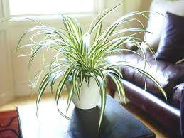 decorative indoor plants decorative indoor plants hanging indoor plants fantastic hanging