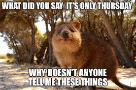 Cute Animals Memes - cute aussie animals memes imgflip