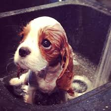 Puppy Eyes Meme - puppy eyes imgur