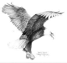 eagle drawing tatuaje fijo pinterest eagle drawing eagle