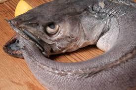 cuisiner le merluchon cuisine