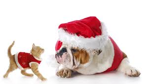pet christmas christmas gift ideas for pet and pets
