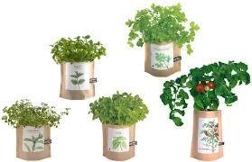 indoor herb garden kits to grow herbs indoors hgtv indoor culinary herb garden starter kit indoor culinary herb garden